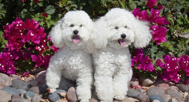 list-hypoallergenic-dog-breeds
