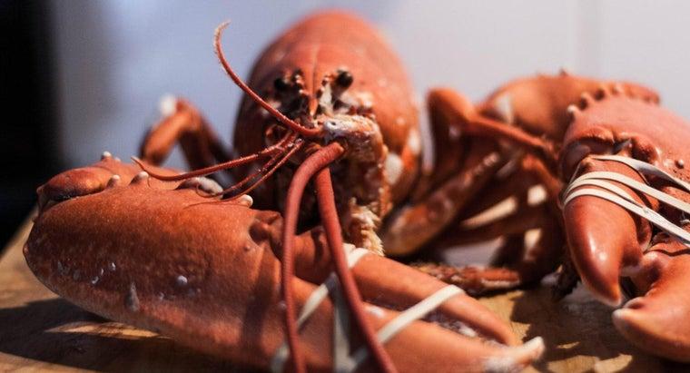 lobsters-breathe