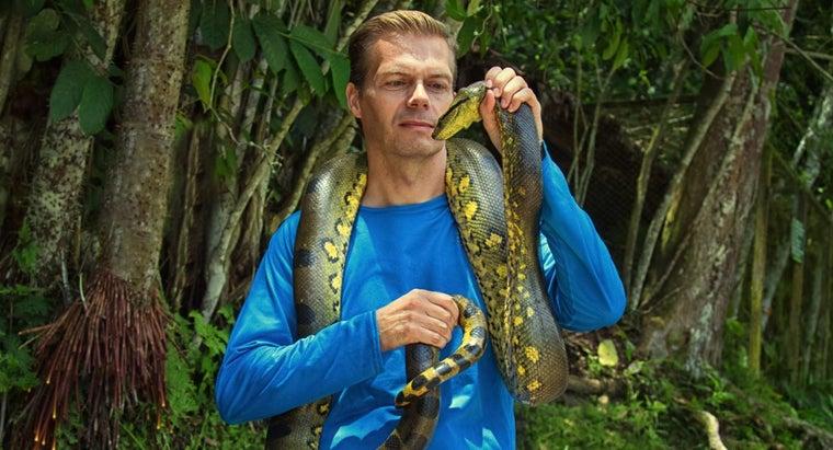 long-anaconda