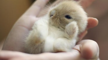 How Long Do Baby Rabbits Stay With Their Mother?