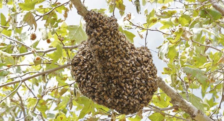 long-bees-make-hive