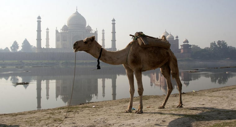 long-can-camel-water