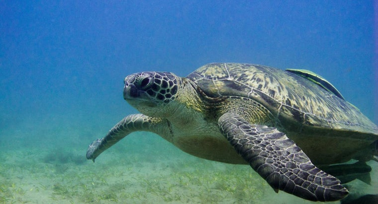 long-can-turtles-stay-underwater
