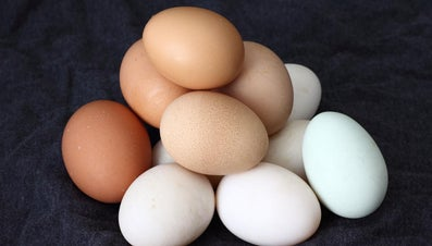 How Long Does It Take for a Chicken Egg to Hatch?