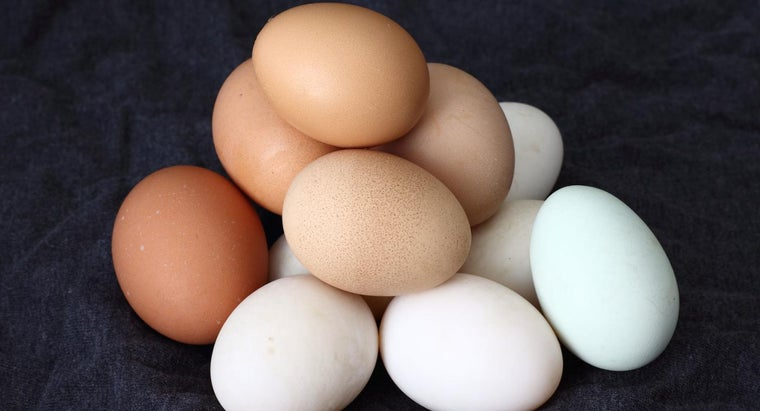 long-chicken-egg-hatch