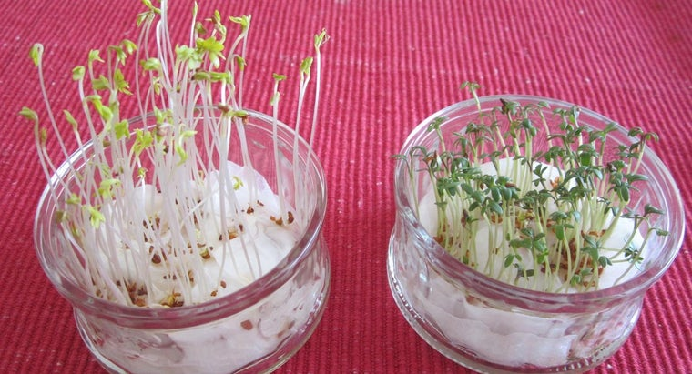 long-cress-seeds-germinate