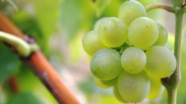 How Long Do Grapes Stay Fresh?