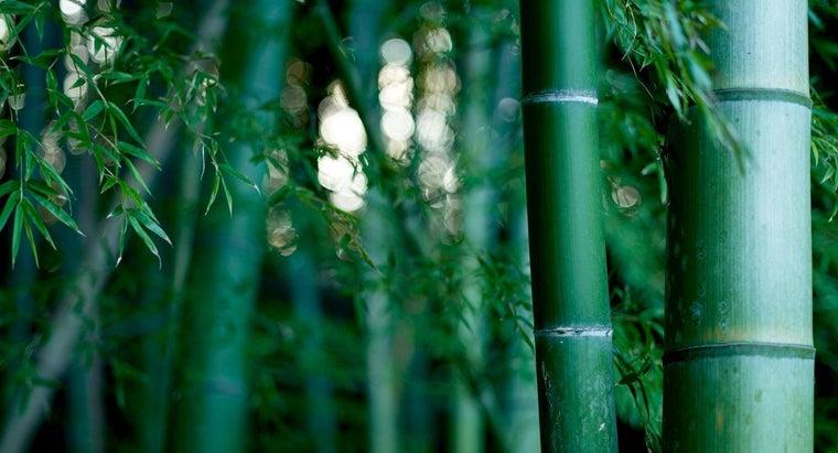 long-grow-bamboo
