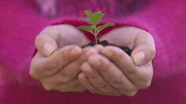 How Long Does It Take to Grow Tree Saplings?