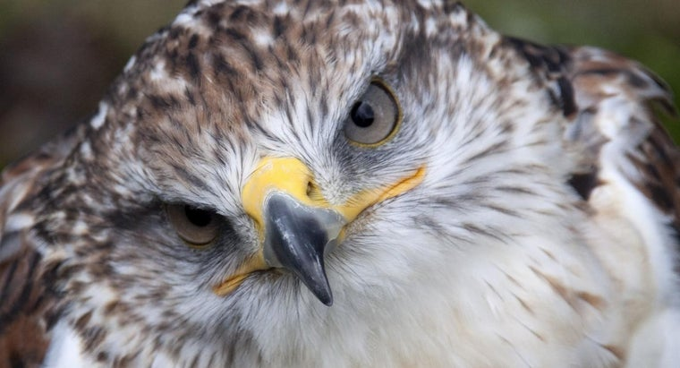 long-hawks-live
