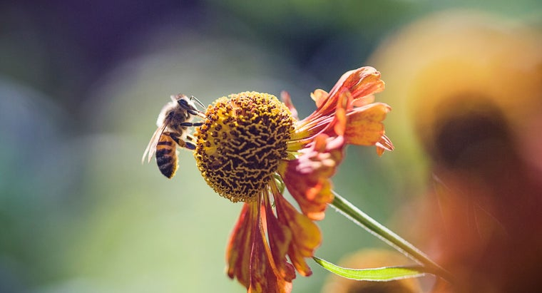 long-honey-bees-live
