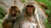 What Is the Life Cycle of a Monkey? | Reference com