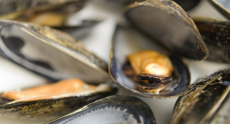 long-mussels-keep-fridge-after-being-cooked