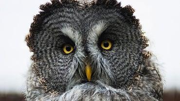 How Long Do Owls Live?