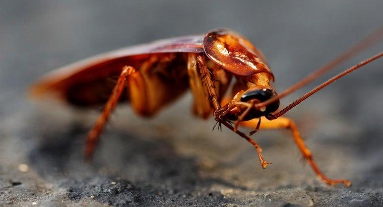 long-rid-roaches