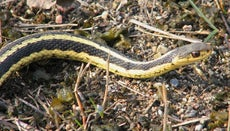 How Long Do Snakes Live?