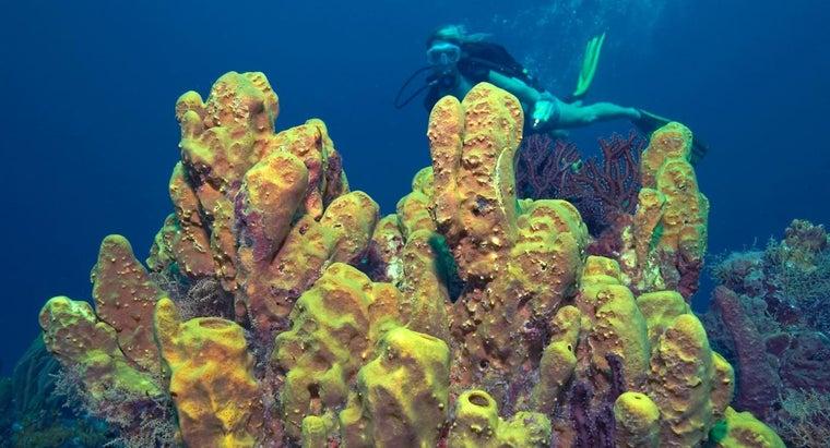 long-sponges-live