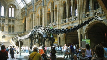 What Was the Longest Dinosaur?