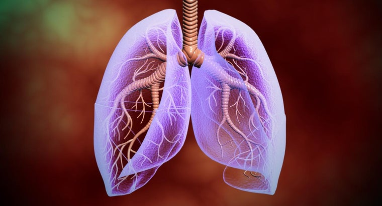 lungs-located-human-body