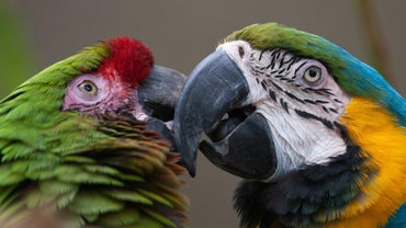 What Do Macaws Usually Eat?