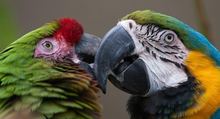 macaws-usually-eat