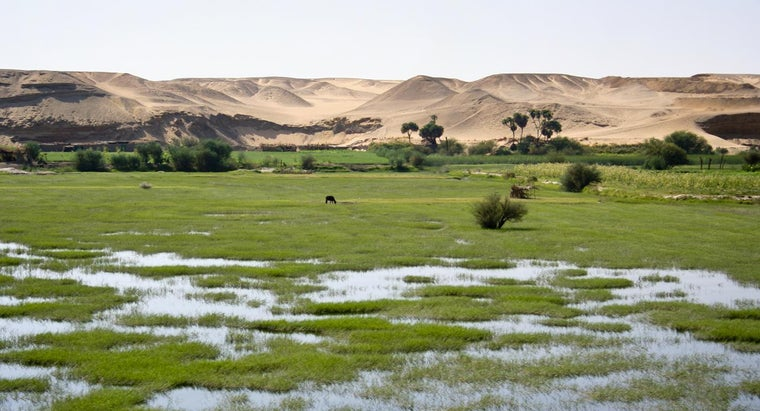 main-crops-grown-africa