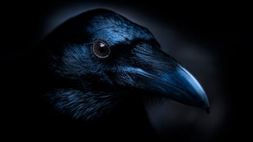 "What Are the Main Themes of Edgar Allan Poe's Poem ""The Raven""?"