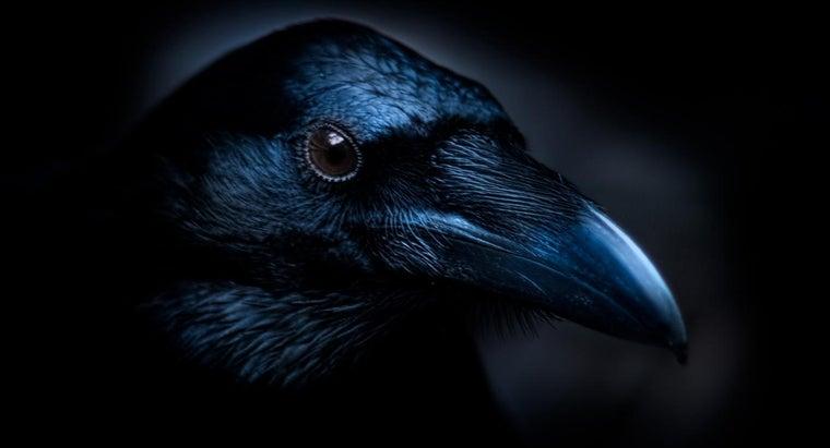 main-themes-edgar-allan-poe-s-poem-raven