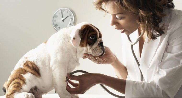 maintain-puppy-immunization-record