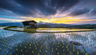 What Is the Major Food Crop of Southeast Asia?