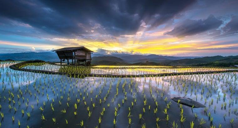 major-food-crop-southeast-asia