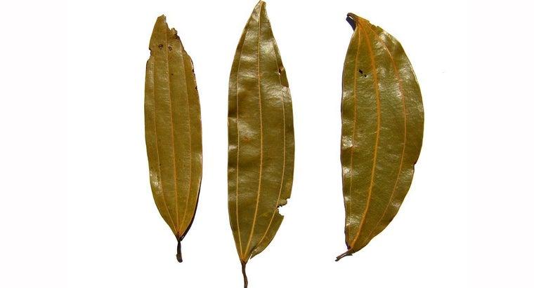 make-bay-leaf-tea