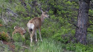 How Do You Make Homemade Deer Bait?