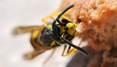 How Do You Make a Homemade Wasp Killer?