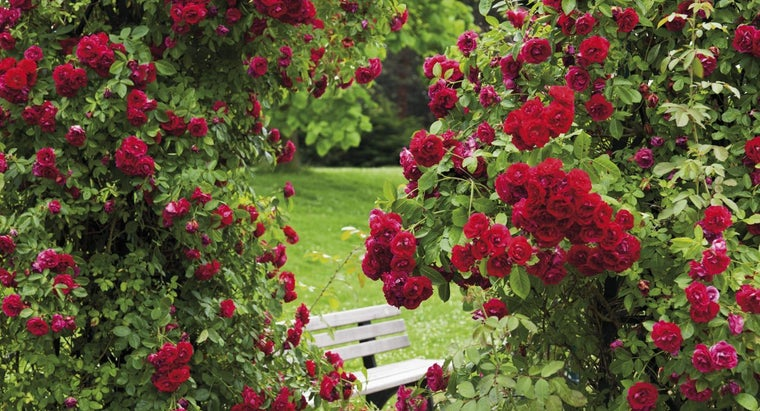 make-natural-fungicide-rose-bushes