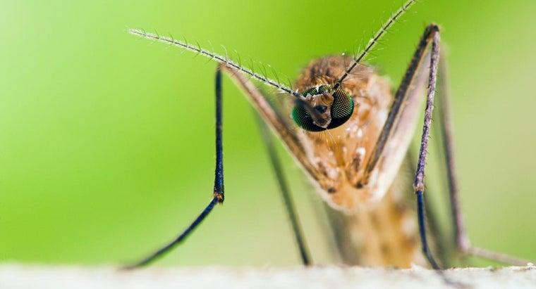male-mosquito