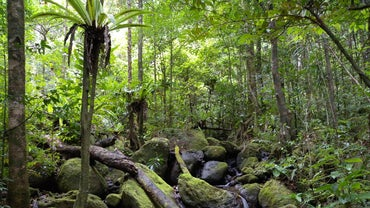 How Many Animal Species Live in the Rainforest?