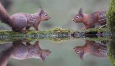 How Many Babies Do Squirrels Have?