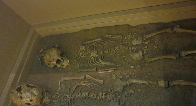many-bones-child-s-skeleton
