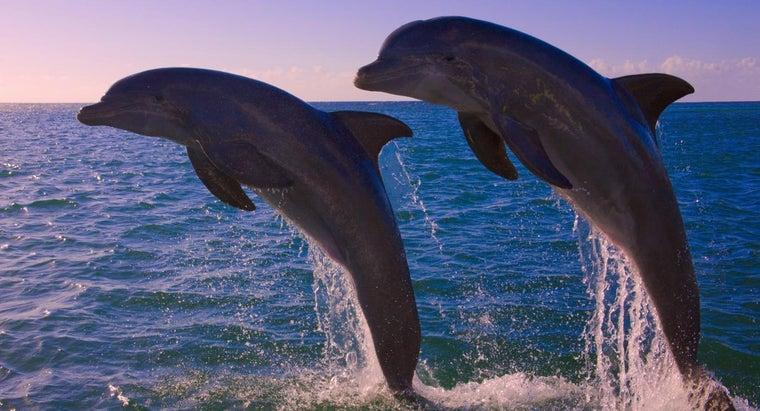 many-dolphins-left-world