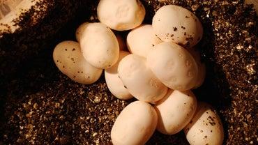 How Many Eggs Do Snakes Lay?