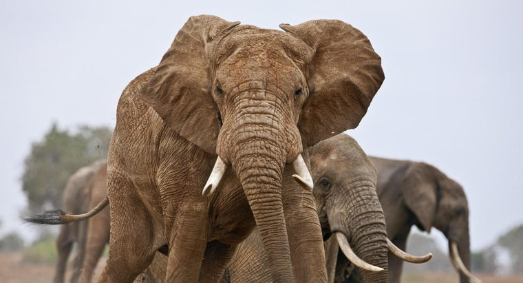 many-elephants-world