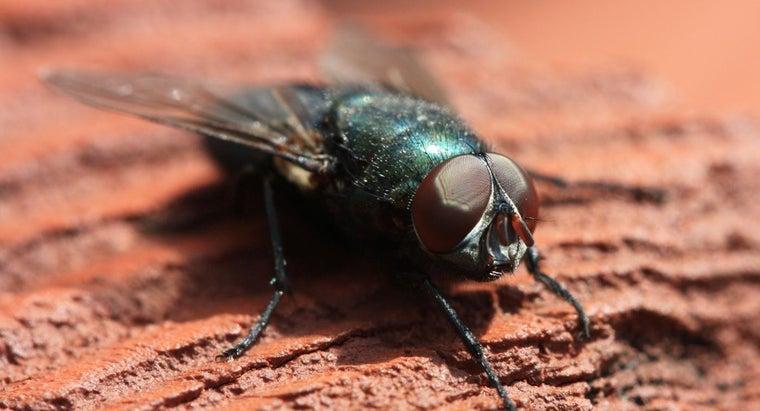 many-eyes-flies
