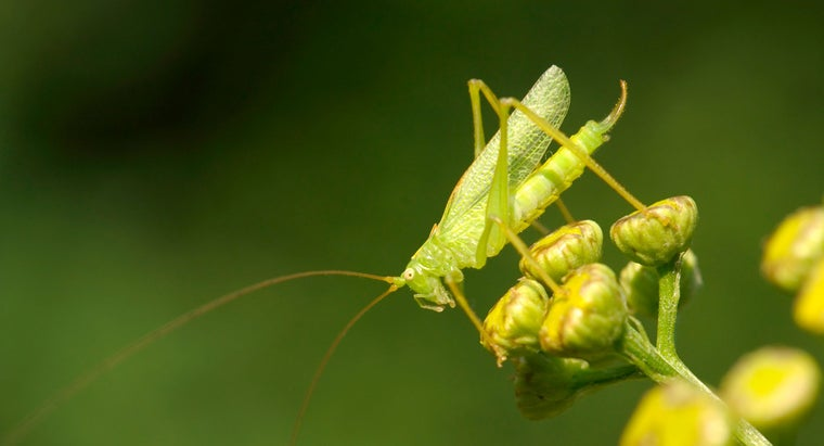 many-eyes-grasshopper