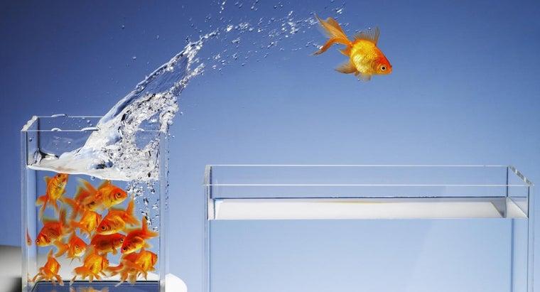 many-fish-can-put-three-gallon-aquarium