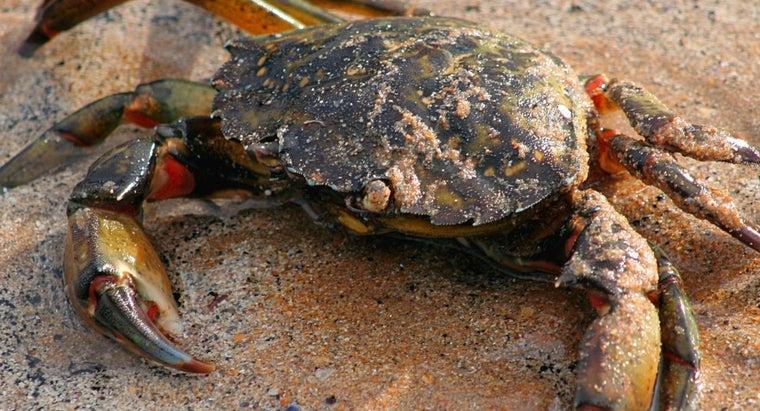 many-legs-crab