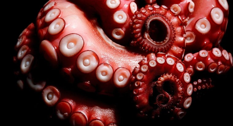 many-legs-octopus
