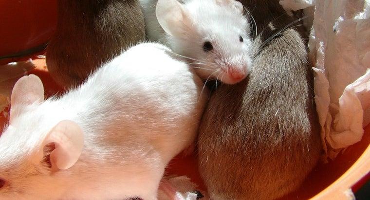 many-mice-litter