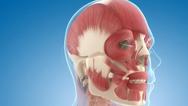 How Many Muscles Are in the Human Face?