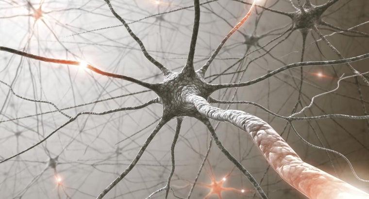 many-nerves-bodies